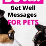get well messages for a pet