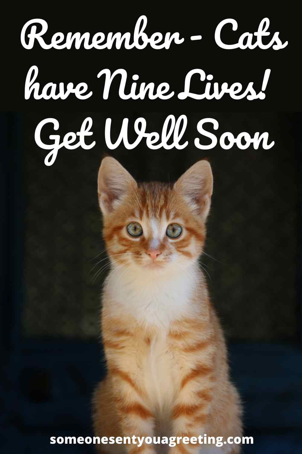 get well message for cat
