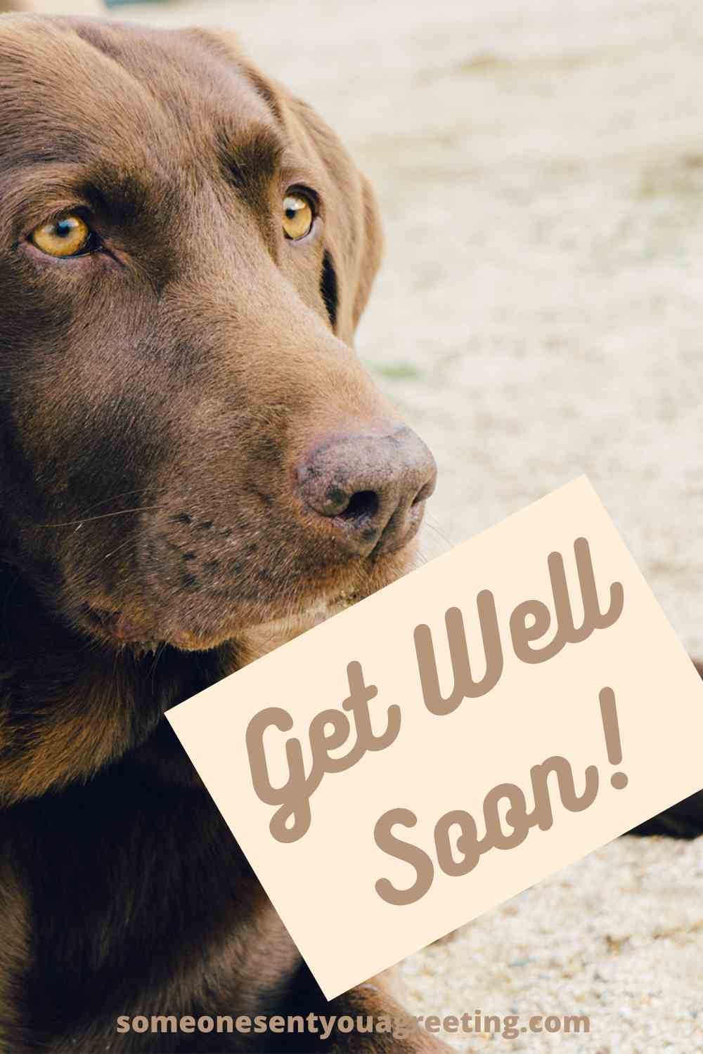 get well wishes for dog